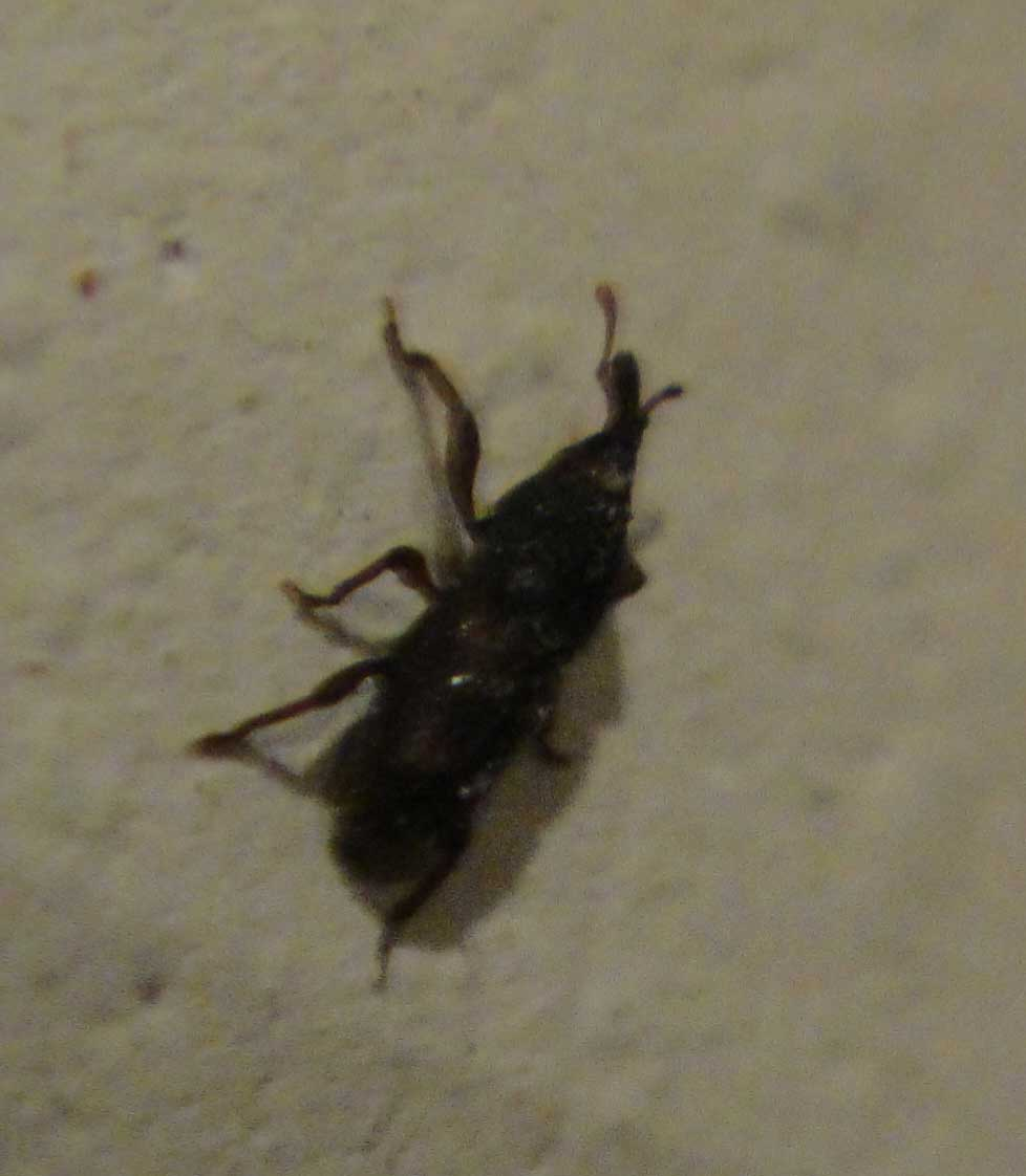 What Is This Bug? - Plants, Pets & Vets